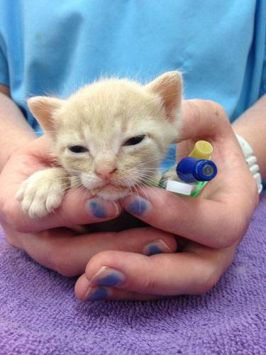 Kitten-pic